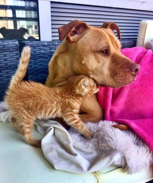 Gato y perro cafés