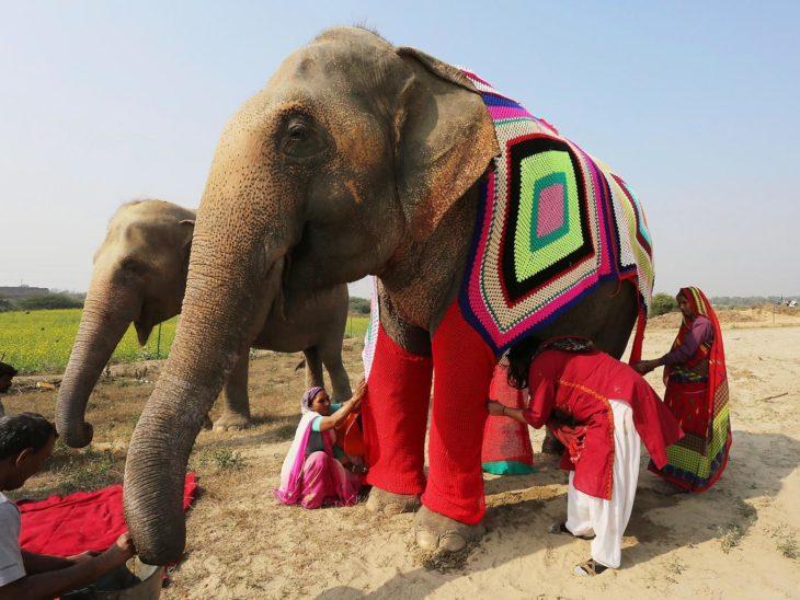 Suéteres elefantes