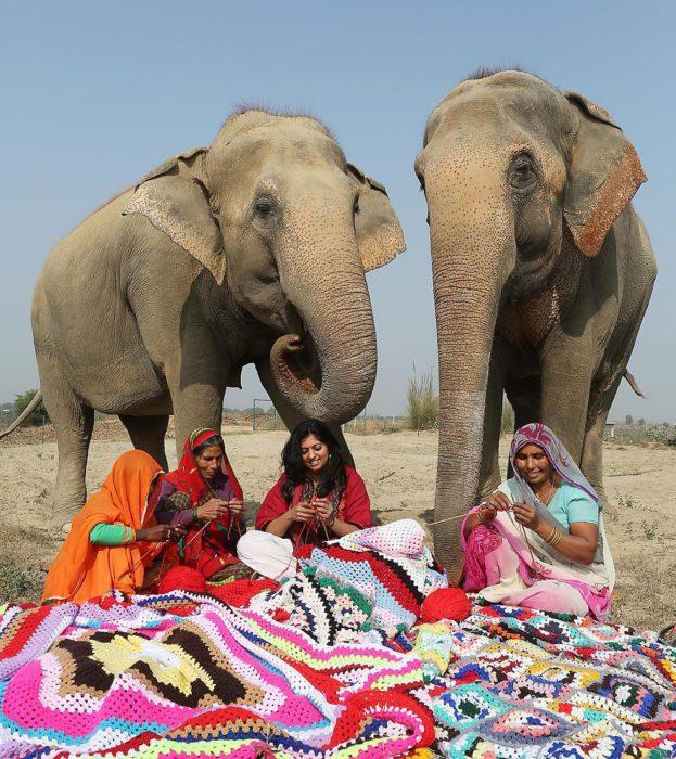 Suéteres para elefantes