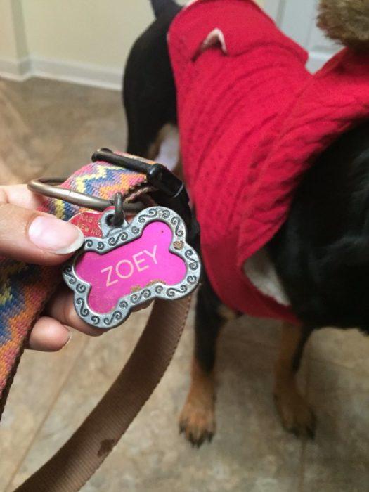 Collar de perrita dice Zoey