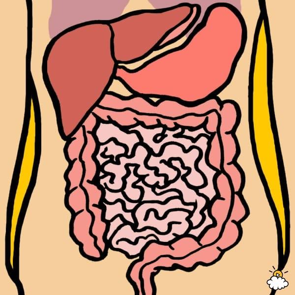Causas del dolor de estómago.