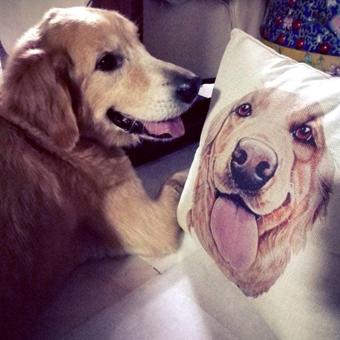 perro frente a una almohada con su cara