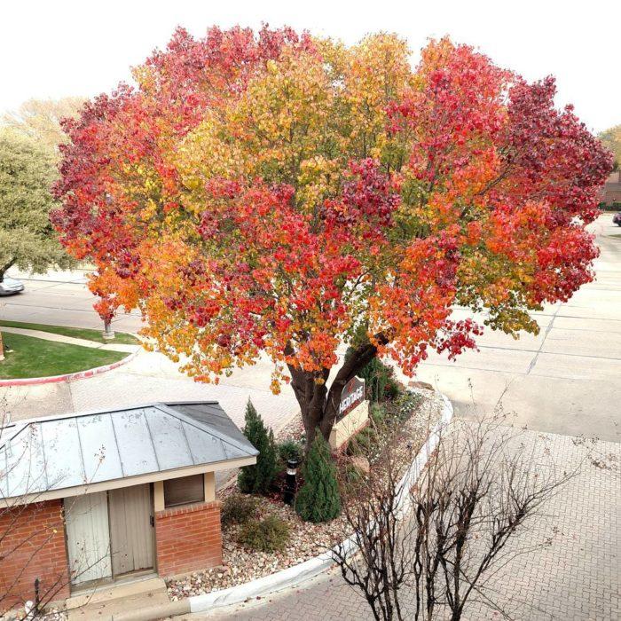 árbol con los colores del otoño