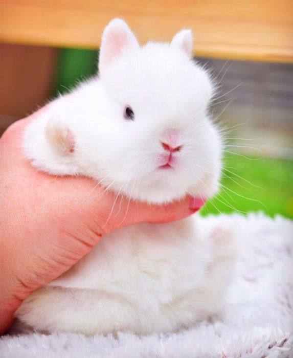 conejo bebé esponjoso