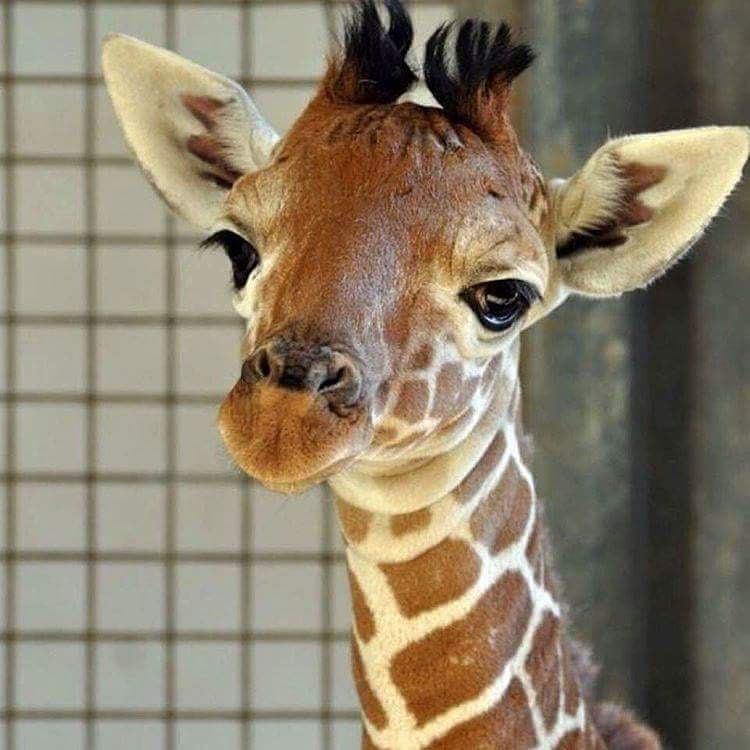 15 fotos de animales que har u00e1n que tu coraz u00f3n se derrita