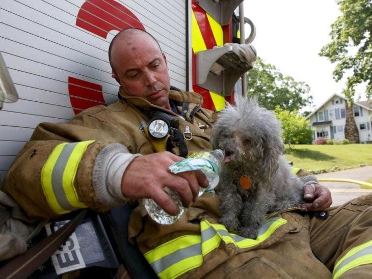 un bombero da de beber agua a un perrito que rescató