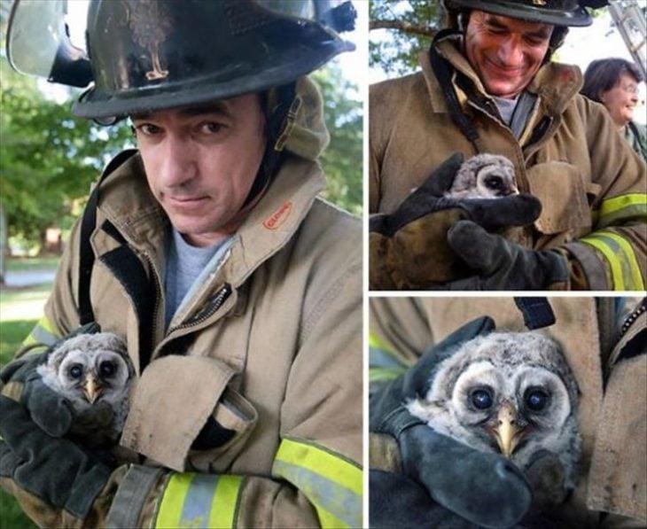 un bombero rescató a un búho bebé