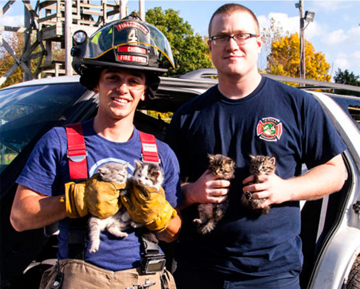 bomberos rescataron a gatitos abandonados durante un simulacro