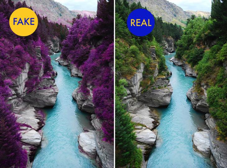 foto falsa de árboles púrpuras en escocia