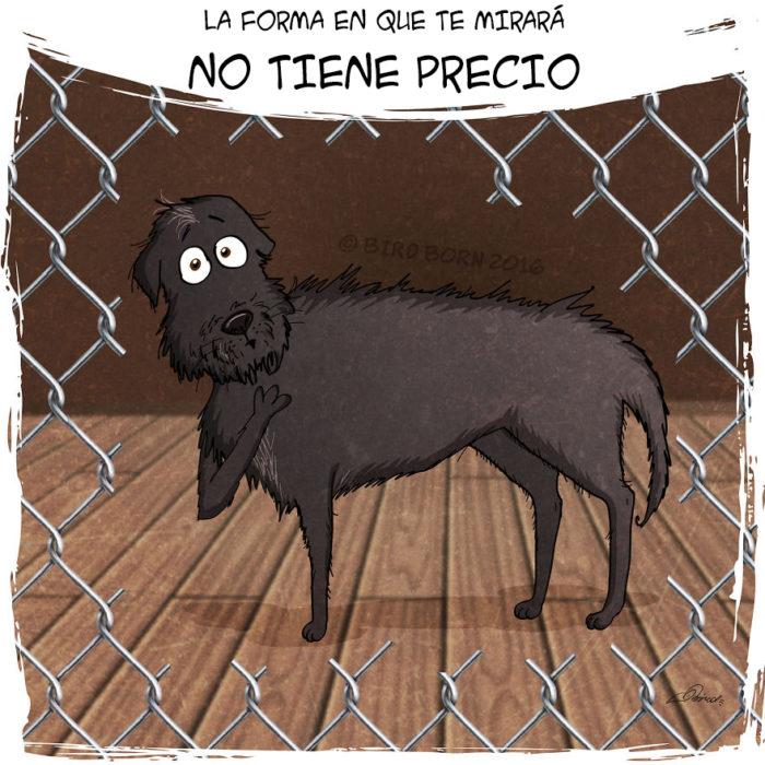 esta es la forma en la que te mira un perro de refugio cuando lo vas a adoptar
