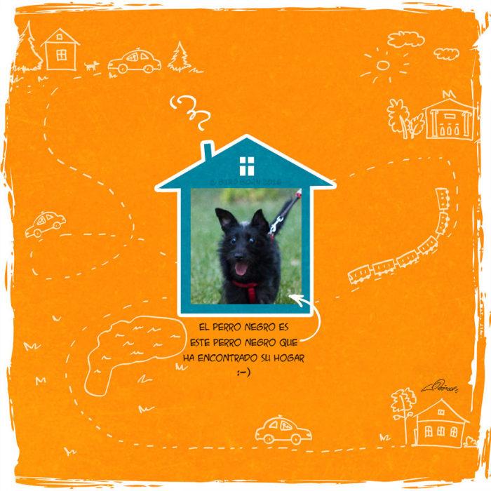 la contraportada de la historia de un perrito adoptado