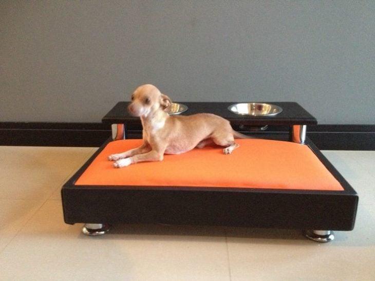cama moderna para perros