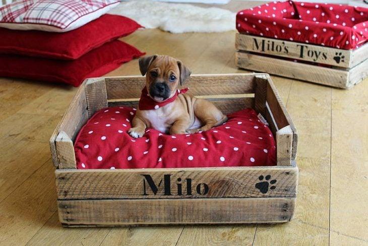 cama para perro hecha con una rejas