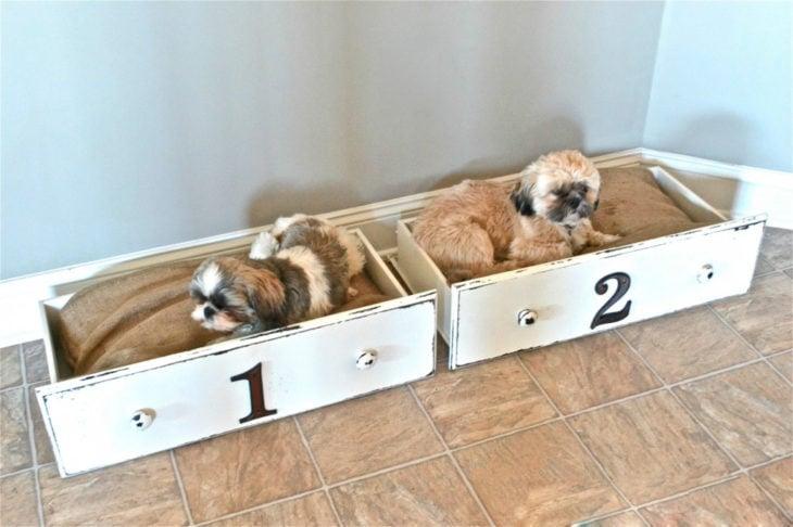camas caseras para perros