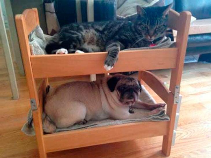 litera para perros y gatos