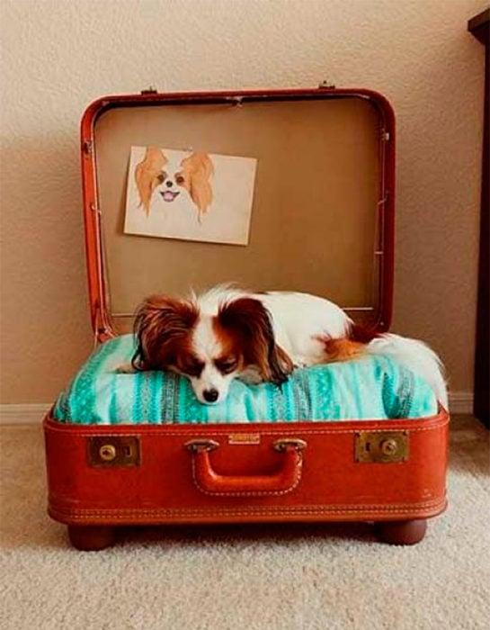 cama para perro hecha en una maleta