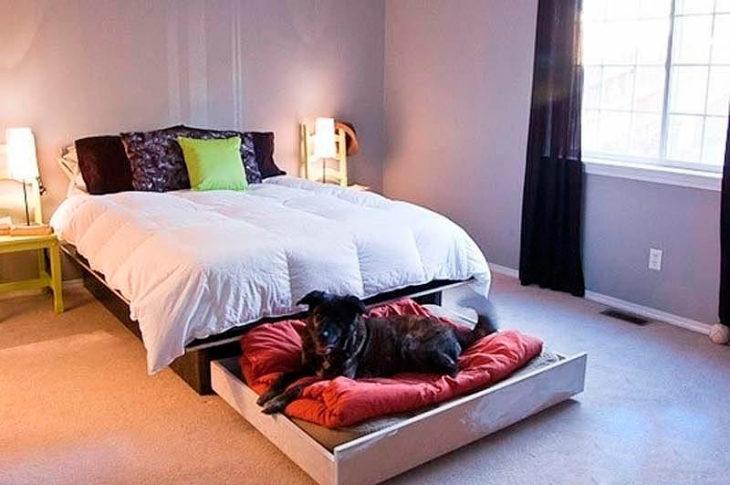 cama para humanos y perros