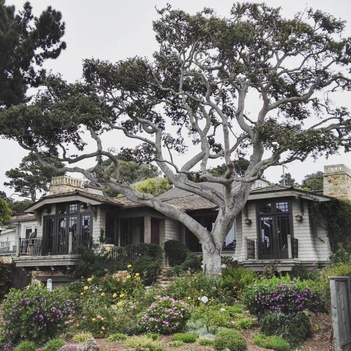 árbol carmel frente a una casa