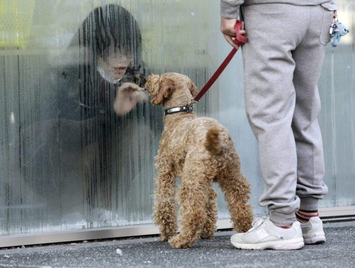 chica detrás de un vidrio y perro del otro lado