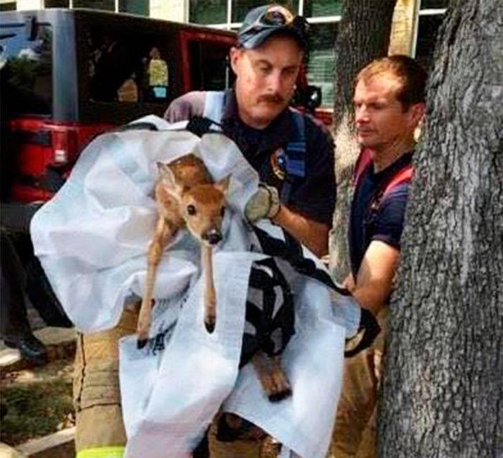 un ciervo bebé rescatado por los bomberos
