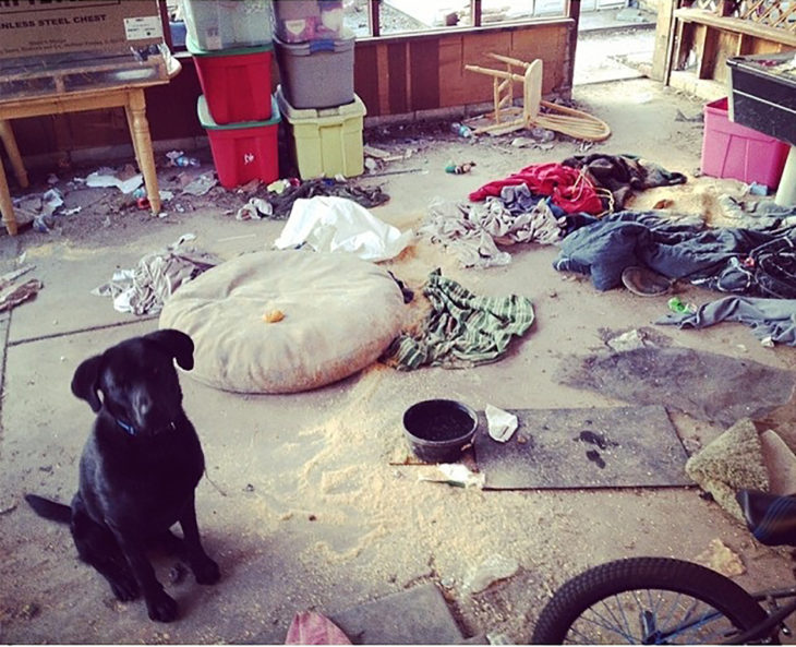cachorro en cuarto desordenado