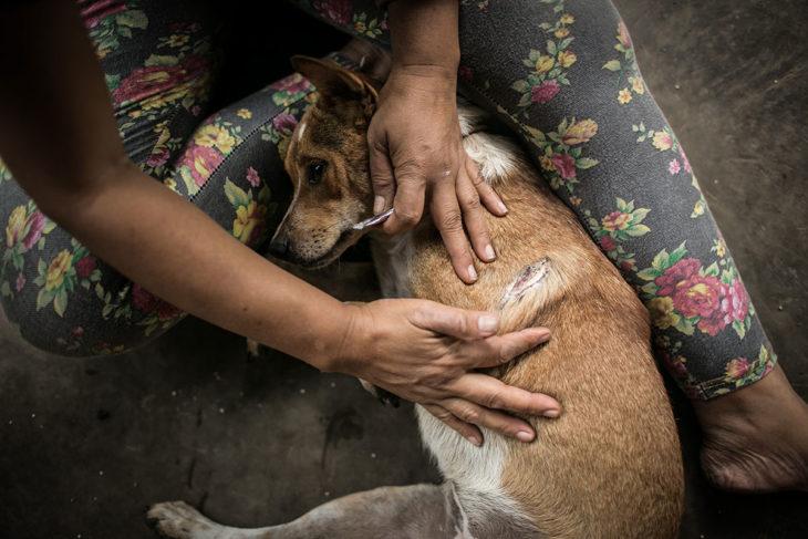 niña cuidadora de perros callejeros