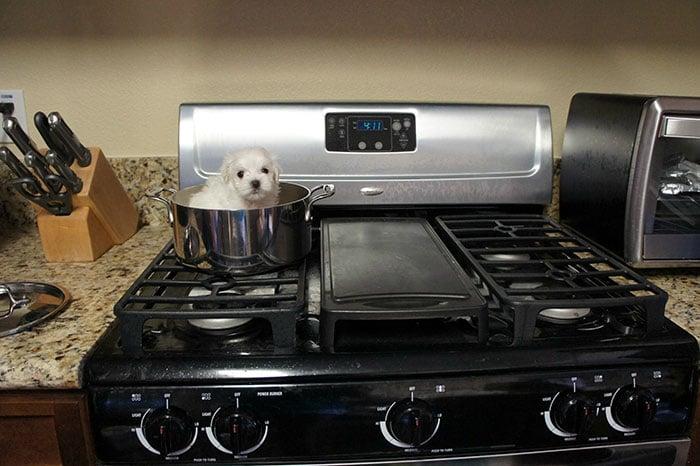 cachorrito en una cazuela sobre la estufa