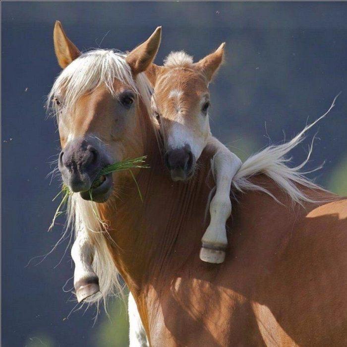madre e hijo caballos