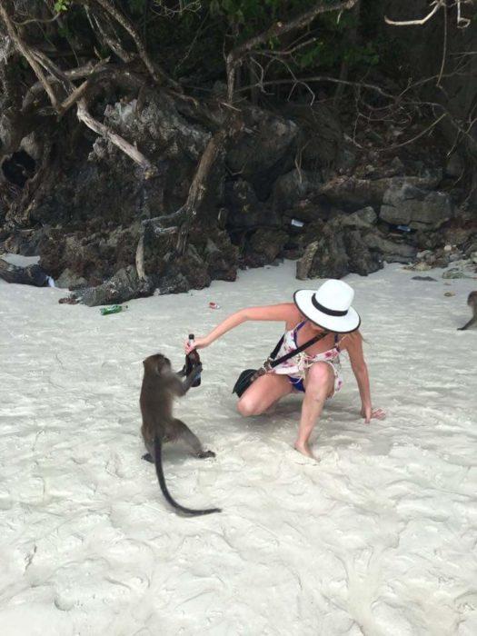 un mono a punto de robarle su cerveza a una muchacha