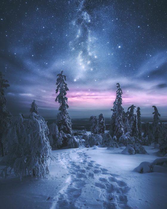 bosque nevado de noche