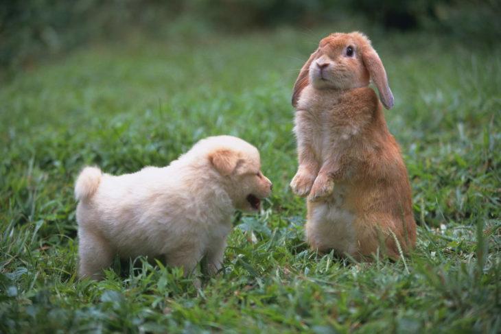 conejito y un perrito cachorro
