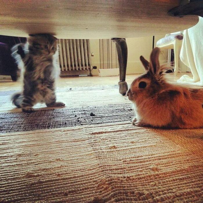 un gato explicándole cosas a un conejo