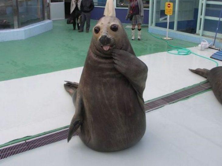 una foca graciosa