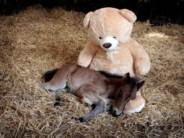 un pony huérfano con su oso de peluche