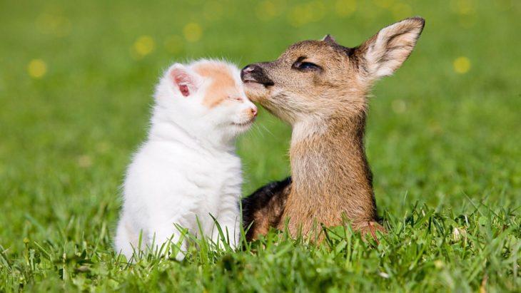 un cervatillo y un gatito que son amigos