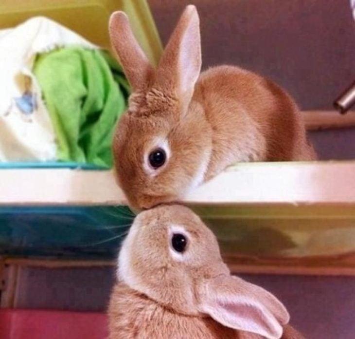 dos conejitos dándose un becerro