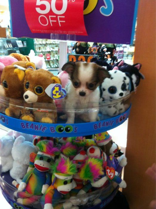 un perrito en una estantería de peluches