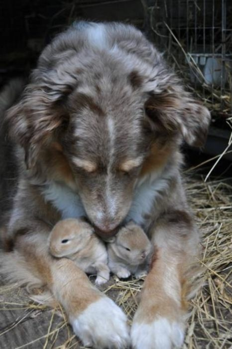 un perro con dos conejitos