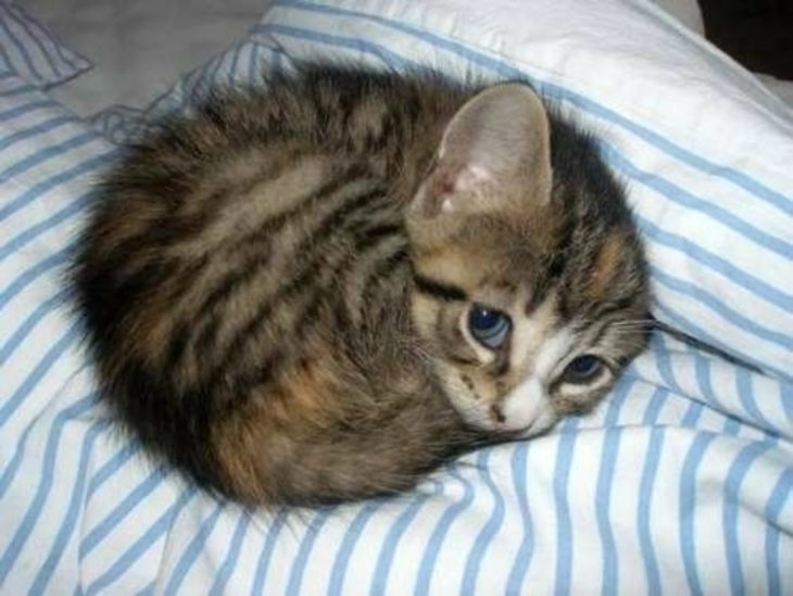 el gatito más tierno del mundo