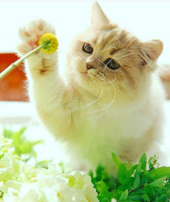 gato tocando una flor