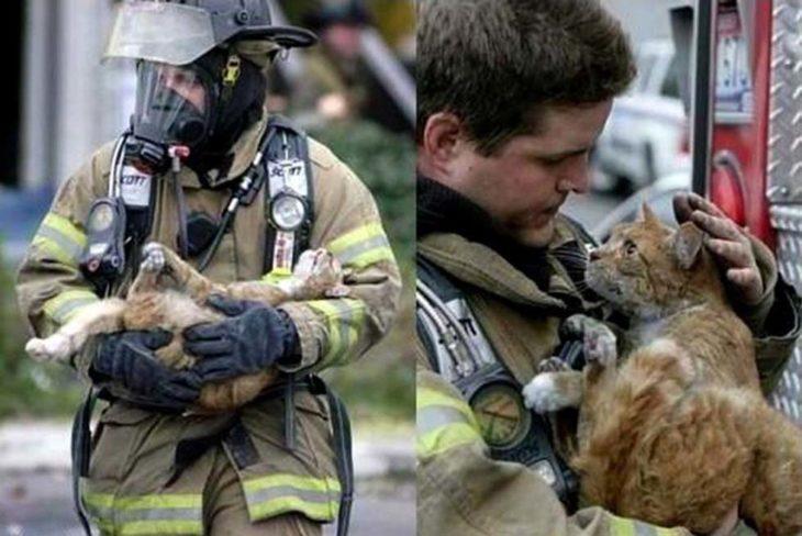 un gatito agradece al bombero que lo salvó de un incendio