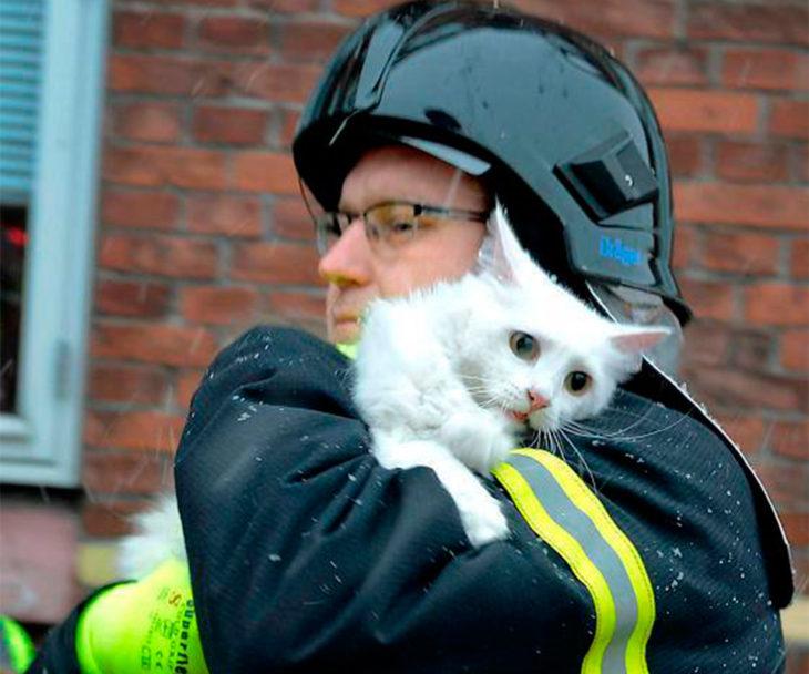 la expresión de un gato al ser rescatado de un gran incendio