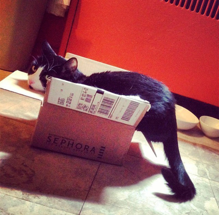 un gato adentro de una caja