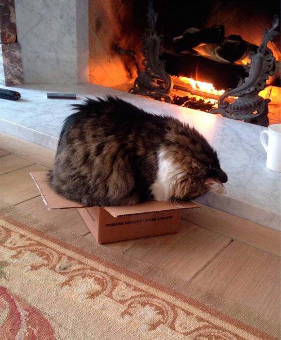 un gato adentro de una caja más pequeña que él