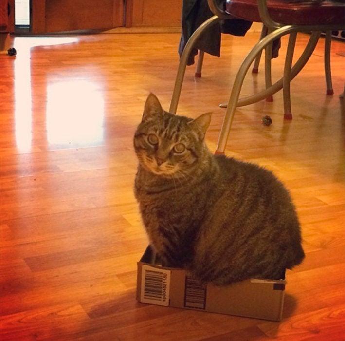 un gato metido en una pequeña caja