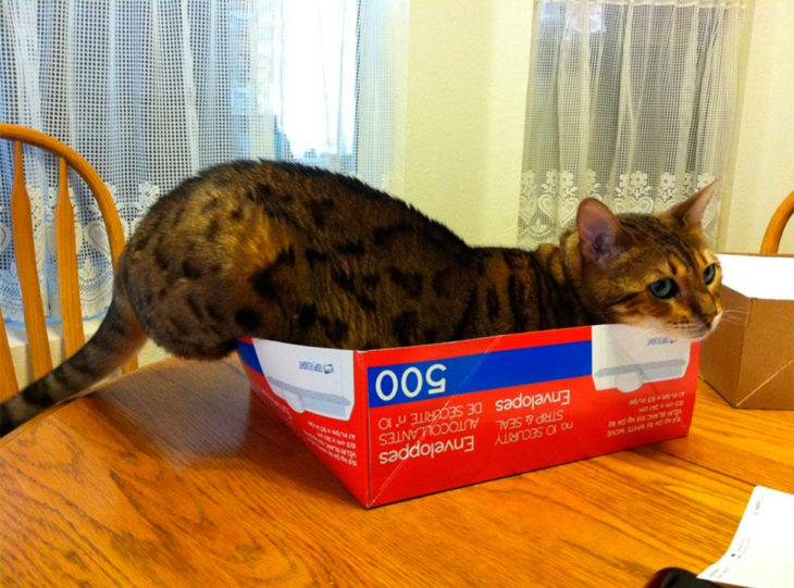 un gato metido en una caja