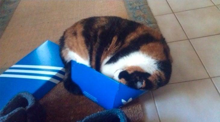 un gato adentro de una despedazada caja