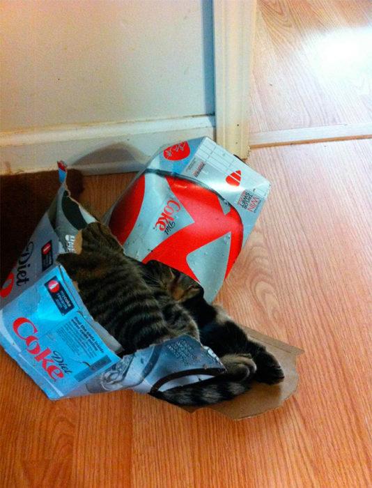 un gato adentro de una caja de coca-cola