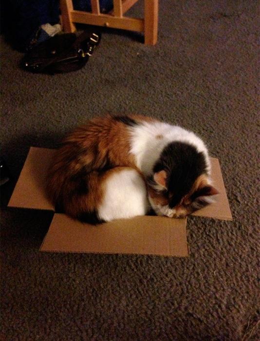 un gatito adentro de una caja más pequeña que él