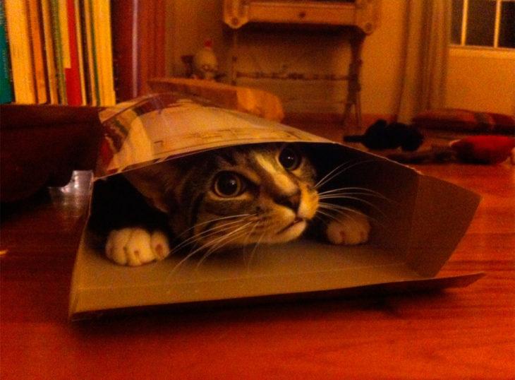 un gato escondido en una pequeña caja